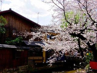 Atmosphère particulière dans la rue Shirakawa