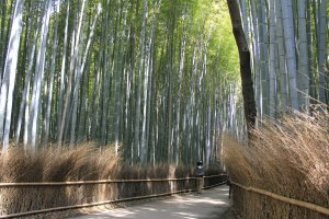 Path fences that are pleasant on the eye in Sagano Kyoto