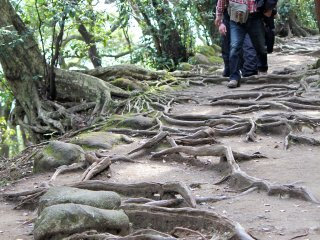 Most of the pathways are never-ending staircases, but you'll eventually run into some natural terrain such as this along the way. Be sure to wear comfortable hiking shoes!