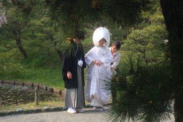 Surprises at Sankeien Garden