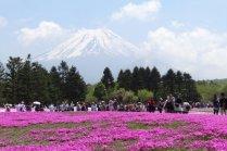 La Vie en Rose à Fujigoko