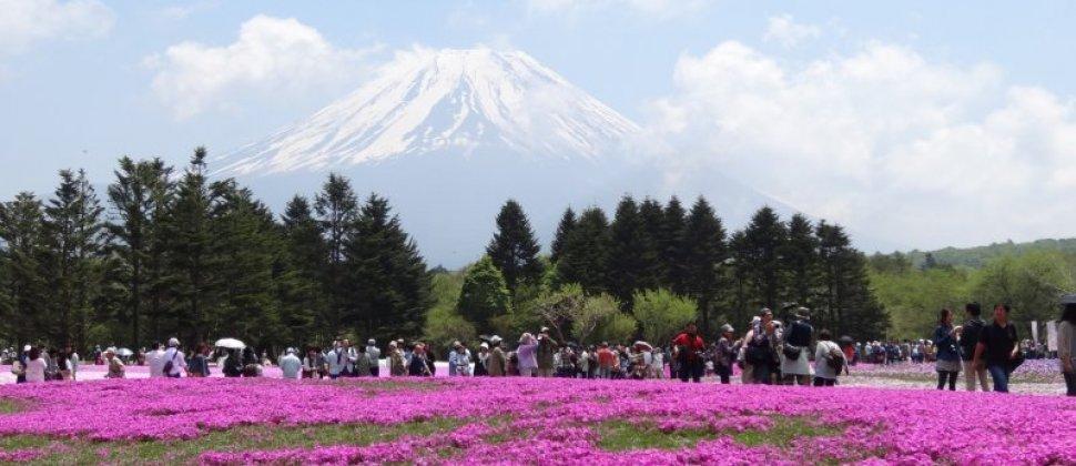 It's a Pink World at Fujigoko