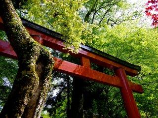 ประตูศาลเจ้าสีแดงและสีเขียวขจีของต้นไม้ใบหญ้า