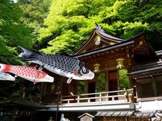 Kifune Shrine and carp streamers in May