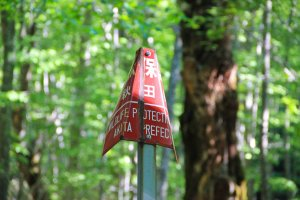 The surrounding forest, located within theTowada-Hachimantai National Park