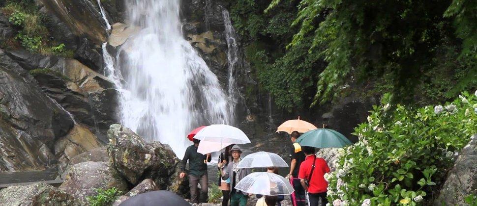 เทศกาลไฮเดรนเยียที่น้ำตก Mikaeri
