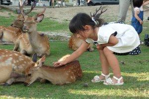 Cette fillette s'est trouvée un nouvel ami