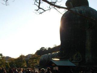 Le Grand Bouddha de Kamakura de dos