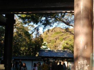 L'imposante tête du Daibutsu de Kamakura