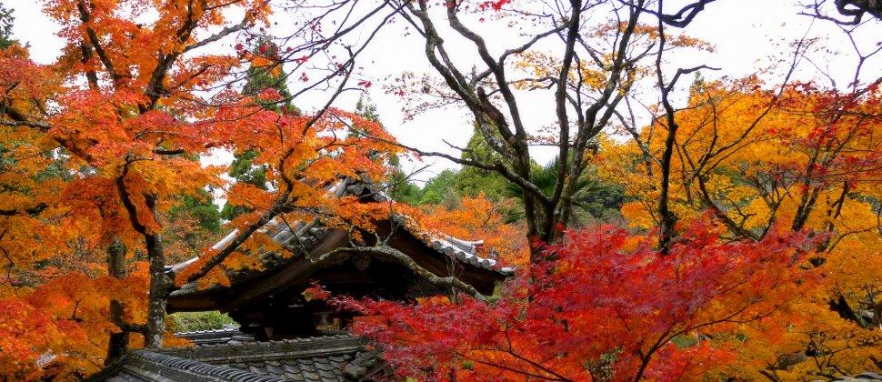 사이묘지의 가을 단풍