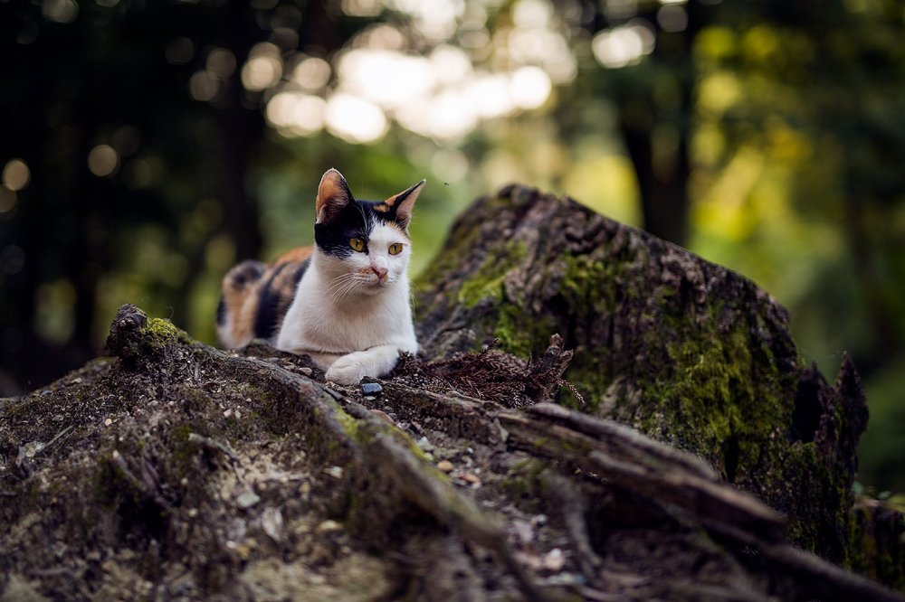 A handsome cat rests against a mossy stump