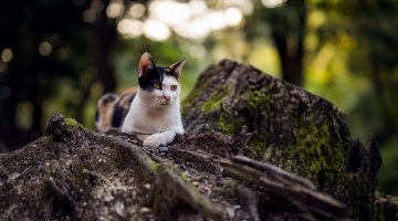 Cats of Fushimi Inari Taisha<