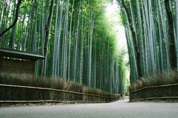 Arashiyama dan Hutan Bambu