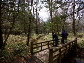 Wonderful and peaceful forest, crossing creeks and passing ponds; great area for bird watching