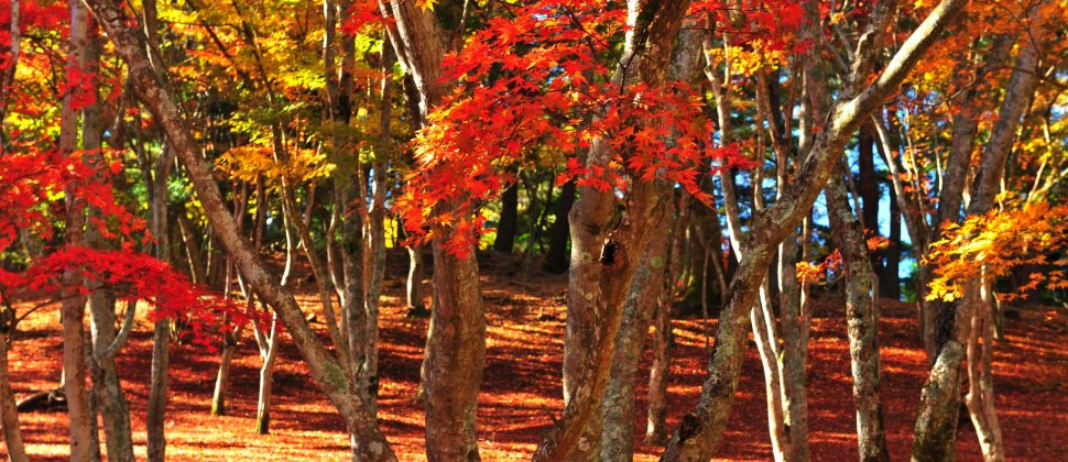 Gorgeous Colors of Shuzenji Forest