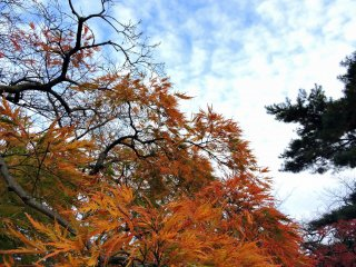 Orange leaves under the autumn blue sky