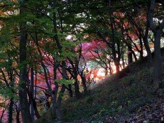 西山公園の丘陵から眺めるサンセット