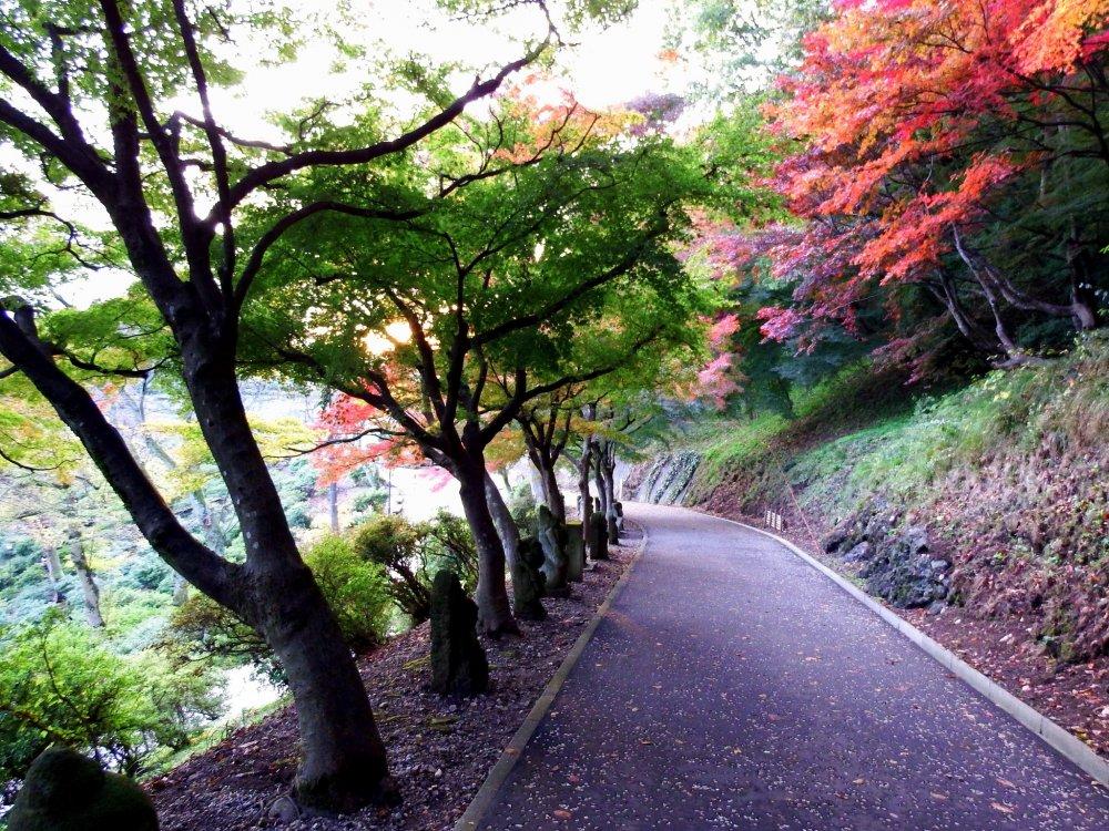 美しい紅葉に彩られた「祈りの道」には沢山の石仏が並んでいる