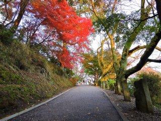 美しい紅葉を愛でながら「祈りの道」を歩こう
