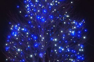 The lights on trees are designed to twinkle by natural wind, like stars in the sky.