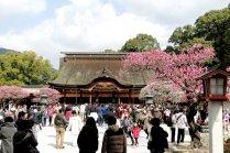 Hoa mơ ở Dazaifu