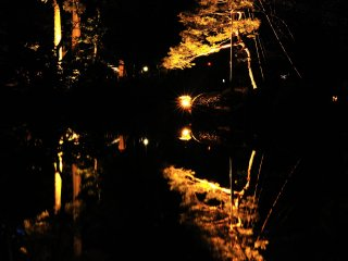 Trees illuminated in golden hues at Kenrokuen Garden