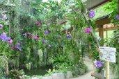 Orchid Sanctuary Dogashima ในอิสุ