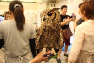 L'étonnant Owl Café d'Osaka