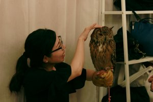 Handling larger birds with bigger talons requires safety gloves.