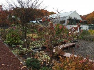 Больше сада: Хорошее место для прогулки после ланча в кафе на территории виноградника