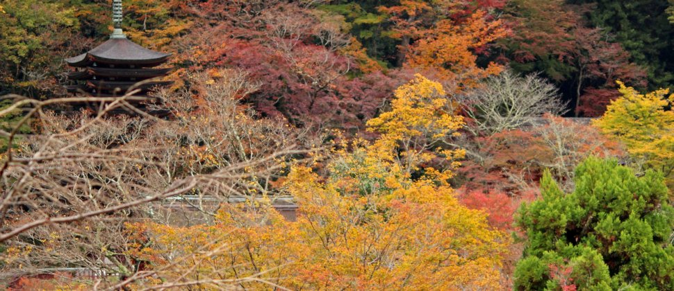 Fiery Autumn at Tanzan Shrine