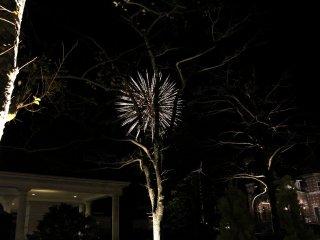 Fireworks behind a wilting tree.
