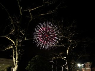 Magnificent fireworks explode in the pitch-black night sky.