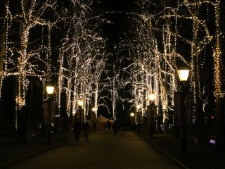Illuminated trees lighting up the street