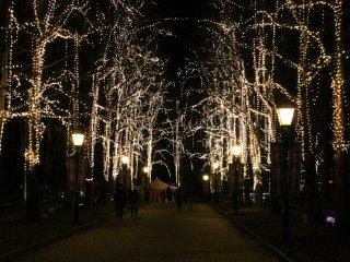 Illuminated trees lighting up the street