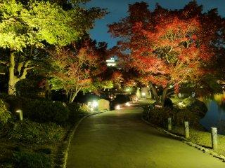 Chemin du parc avec les magnifiques couleurs d'automne mises en valeur par des éclairages temporaires