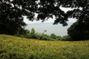 Dhalia Garden