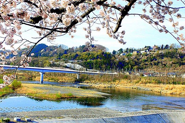 Sakura di Sepanjang Sungai Tama