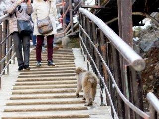 พวกลิงเหล่านี้เดินเตร็ดเตร่อย่างเสรีในสวน เพราะสวนแห่งนี้เป็นของพวกมัน ดังนั้นอย่าลืมข้อนี้ และโปรดระวังเวลาคุณเดิน อย่างไปเยียบพวกลิง
