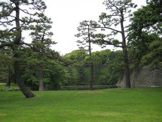 Beautiful green grounds
