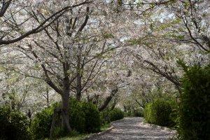Ogi Park - One of Saga's many great spots