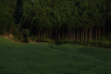 Entre las colinas de Hakone