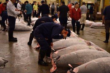 Mudança do Mercado de Peixe de Tsukiji Adiada