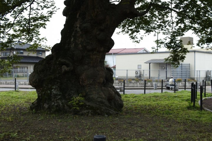 An Ancient Tree