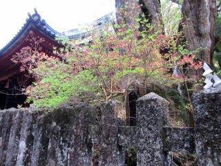 Spring flowers in Nikko