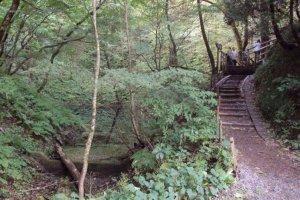 Plusieurs sentiers s'offrent à vous pour explorer la forêt et rejoindre les différents lacs et étangs de la région