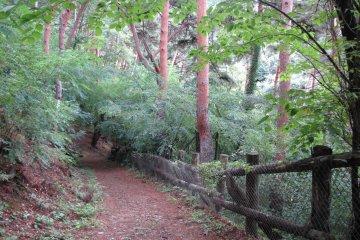 Hiking in Asama