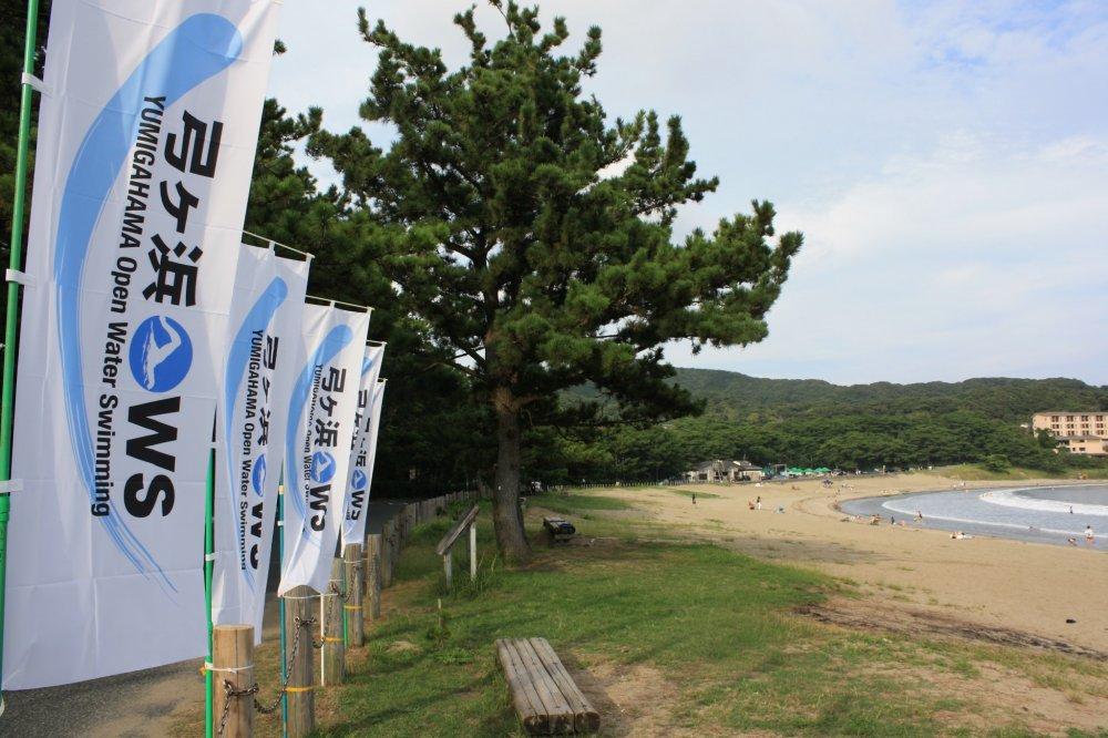 La plage de Yumigahama et ses pins