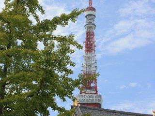 La tour rouge et blanc depuis le parc de Shiba