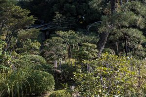 Japanese trees and shrubs fill every inch of the garden